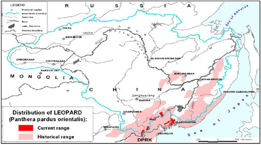 Amur Leopard Map