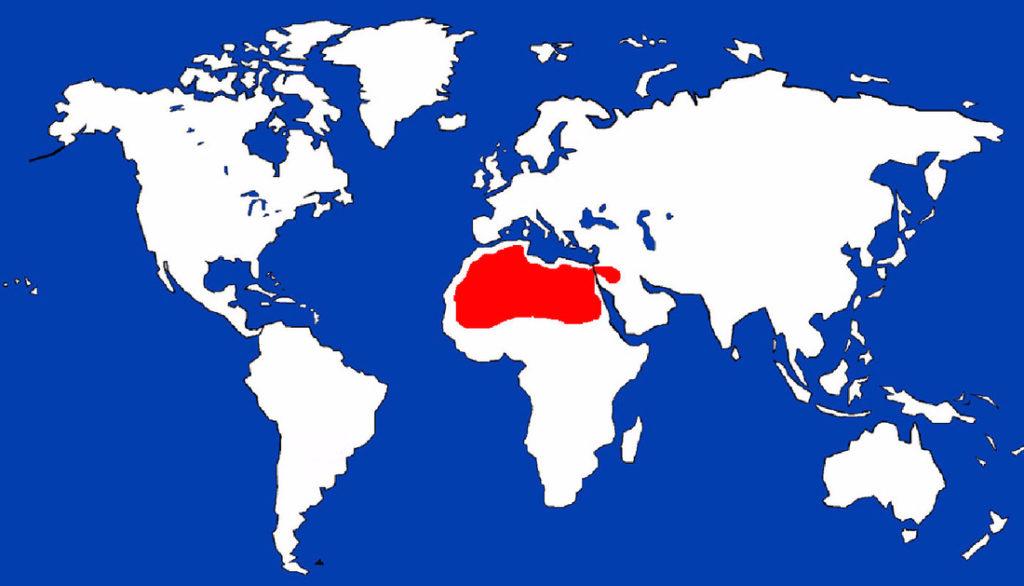 Fennec Fox – Capron Park Zoo on fox climbing tree, fox chasing rabbit, fox habitats chart, grey fox range map, fox forest map, fox scientific name, kit fox map, arctic fox map, fox food chain, fox scream sounds, red fox map, red panda territory map, fox fish, fox population chart, fox territory map, fox population by state, fox eating, fox snake map, fox squirrel range map, fennec fox map,