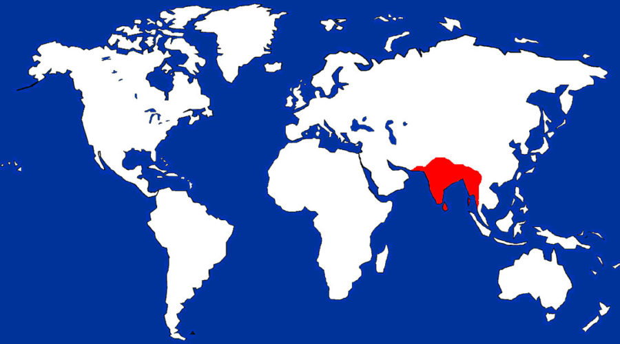 Indian Flying Fox Map