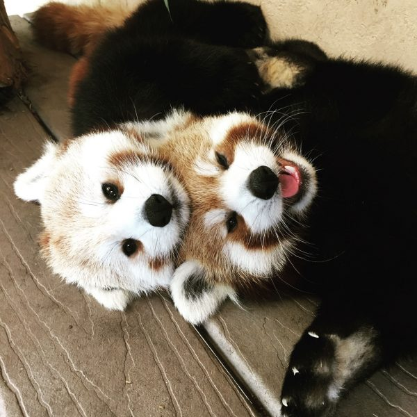 Roji and Pabu