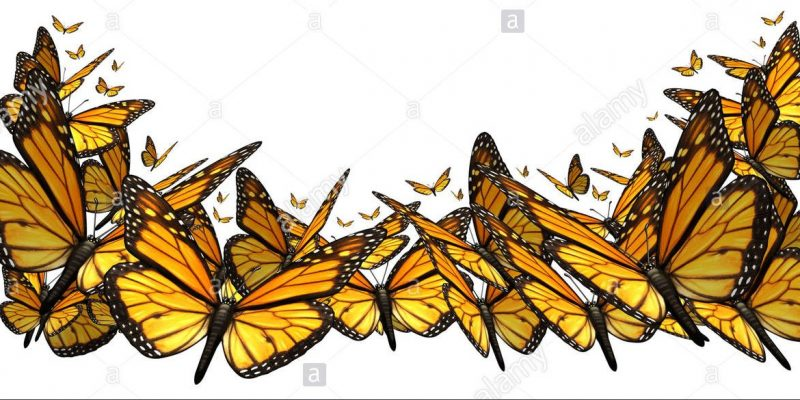 butterfly-border-design-element-isolated-on-a-white-background-as-DA4A65